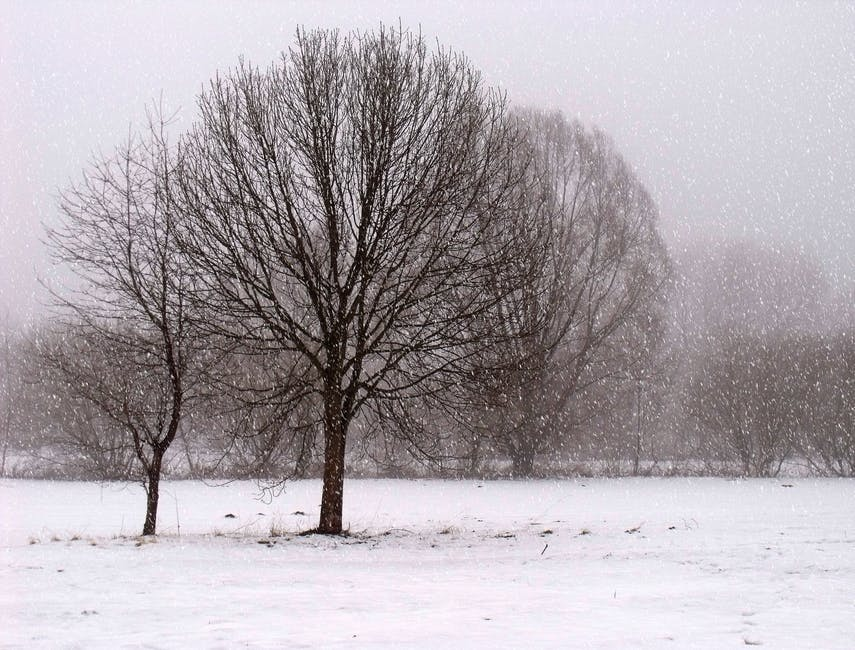 An image of snow on trees and grass.