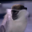 Monkey chases TV presenter out of studio during interview