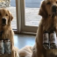 This brewery is using 'brew dogs' to deliver beer to people during lock down