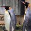 Man jailed for stealing two penguins and selling them on Facebook in the UK