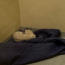 Lamb rescued by Gardai spends night in jail cell